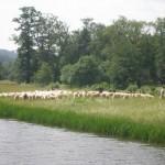 Au-lac-De-Felzins